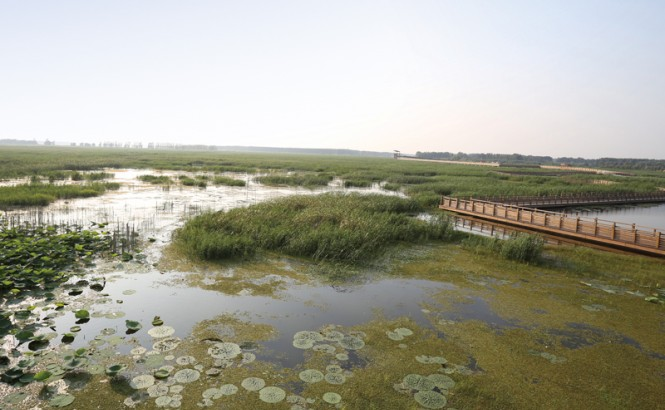 A clear, light blue sky fills the top half of the image and a green wetland, with grasses, algae, and lily pads, fills the bottom. A fenced, raised boardwalk made of wood is shown on the right side of the image, zig zagging toward the horizon..