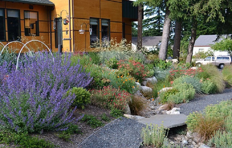 This image shows the side yard of a house in Washington state. The yard includes a rain garden that collects water from the street and filters pollutants. The garden includes drought-tolerant plants and grasses. Perennials range in color from purple to green to red. An orange house sits in the background.