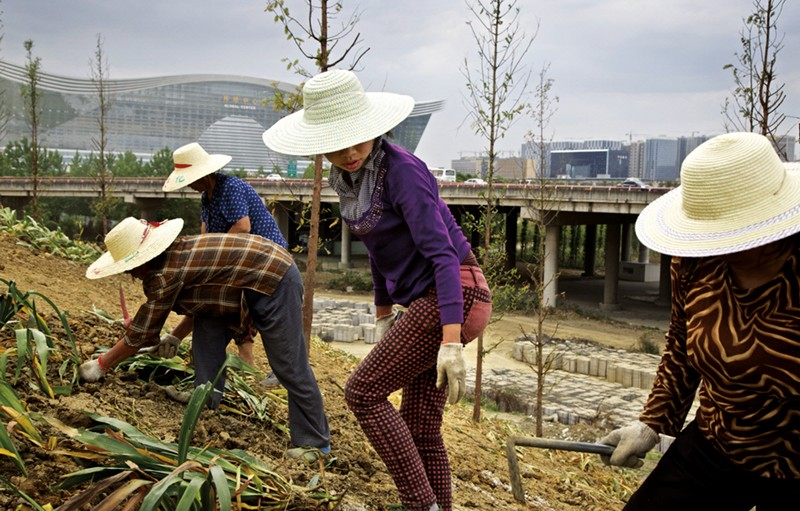 Against the backdrop of urban buildings and an elevated highway, four women and men, wearing light colored straw hats and gardening gloves, plant trees and harvest grass on a hill in an urban park.